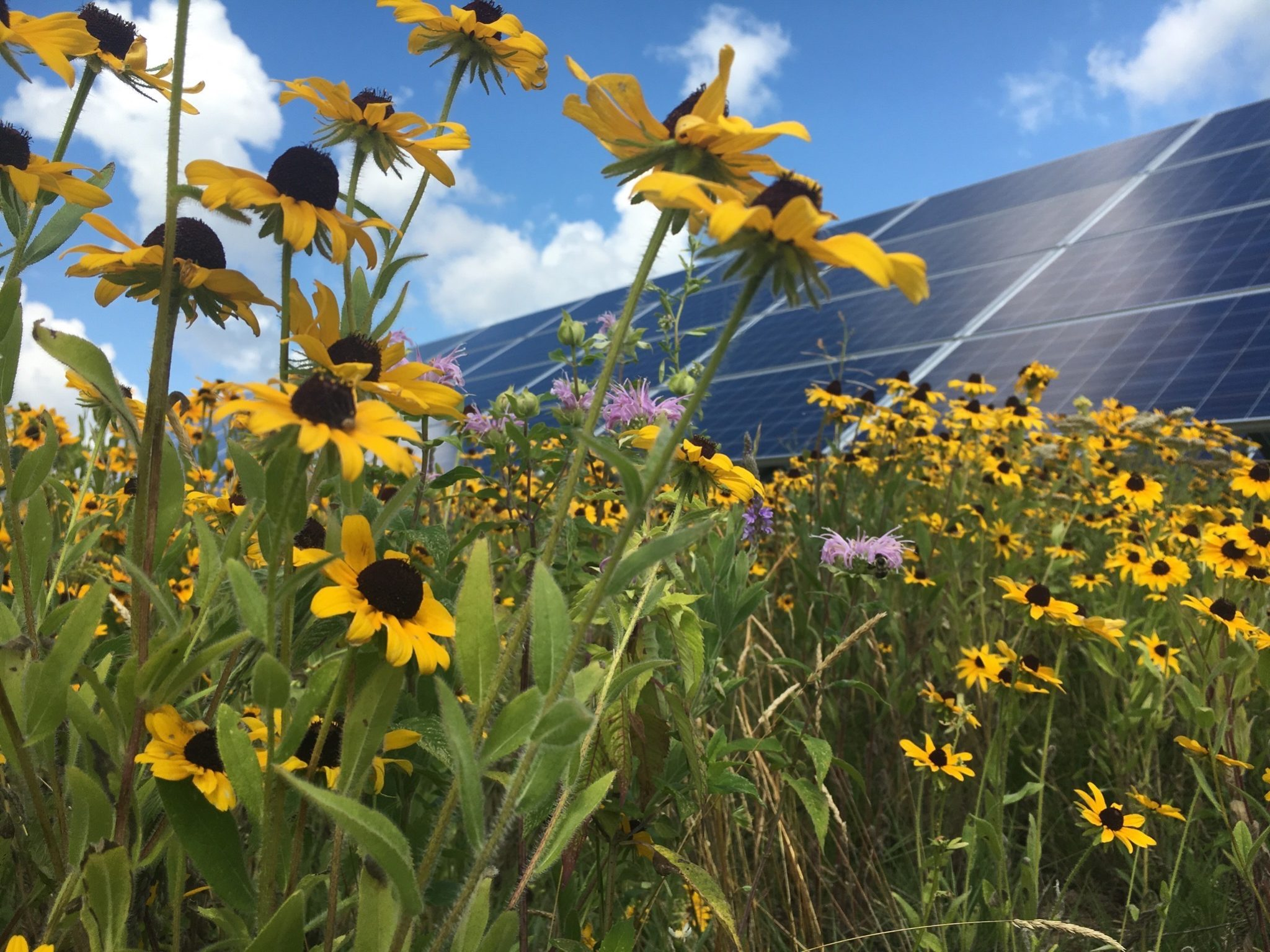 Organic Valley Goes 100% Renewable through Community Solar - Rocky Mountain Institute